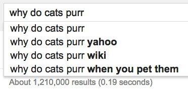 cats purr google