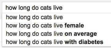 cats live google