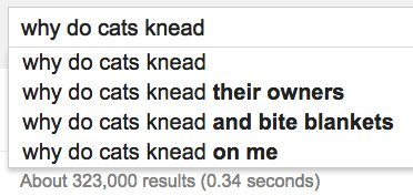 cats knead google