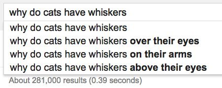 cats whiskers google
