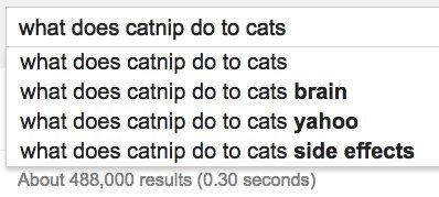 cats catnip google