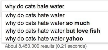 cats water google