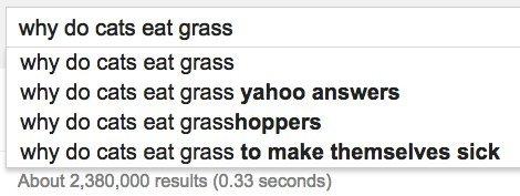 cats grass google