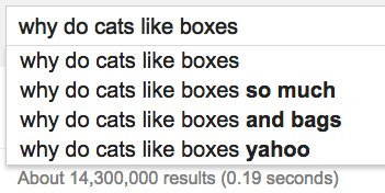 cats boxes google