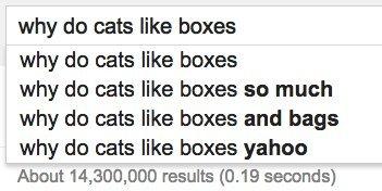 cats boxes google