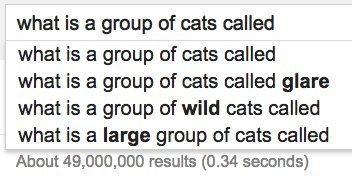 group cats google