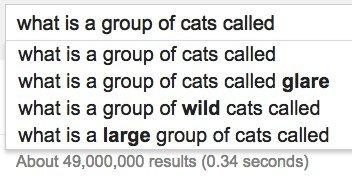 group cats google