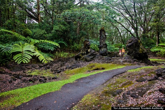lava tree far