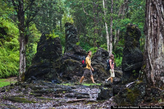 lava tree close