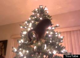 Cats Vs Christmas Trees - A Supercut Of Destruction