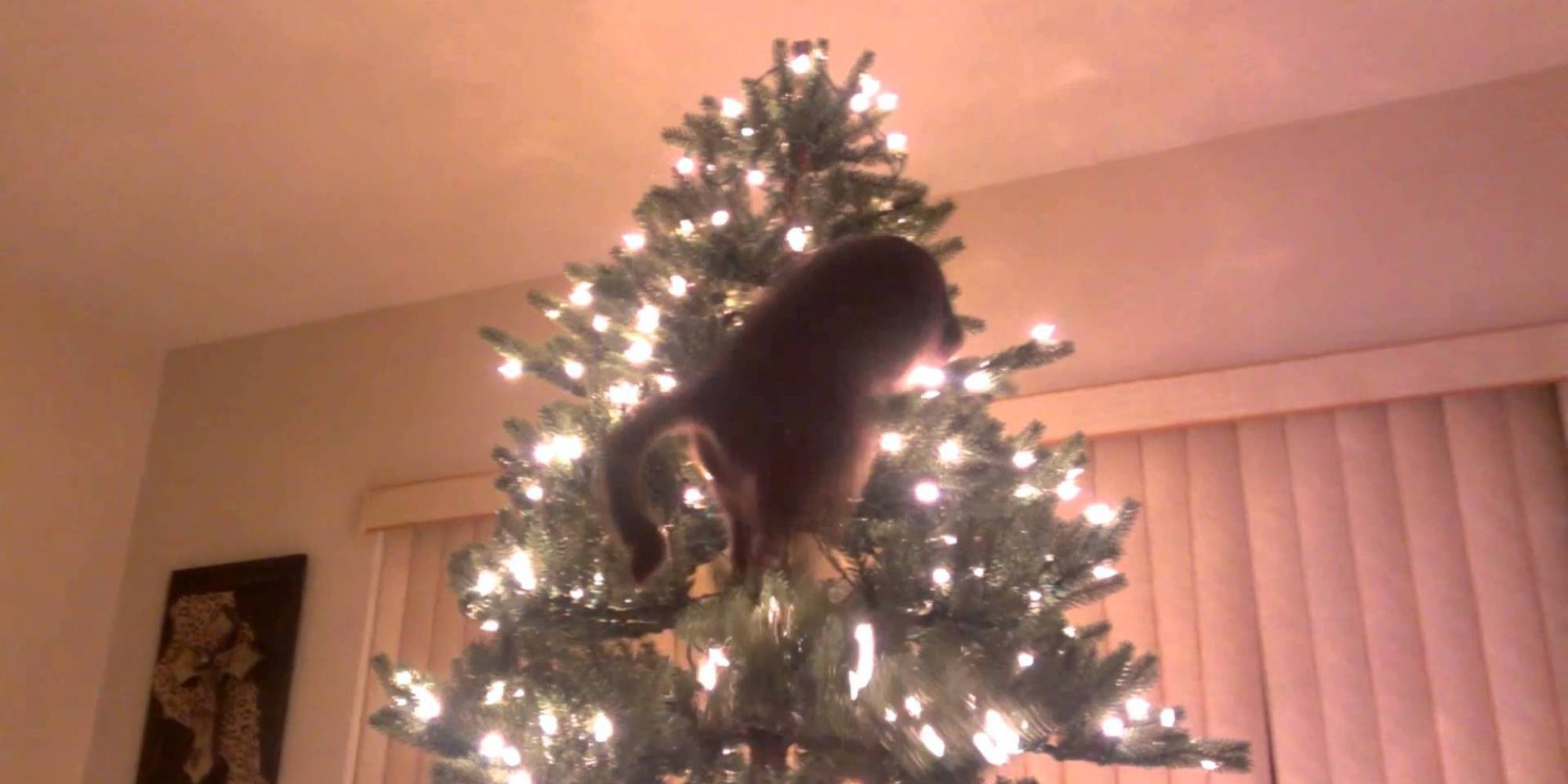 Cats Vs Christmas Trees A Compilation