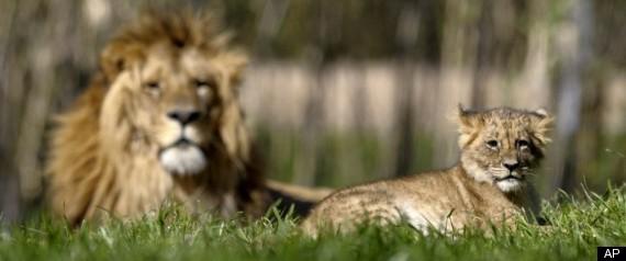 JAMES JABLON LIONS