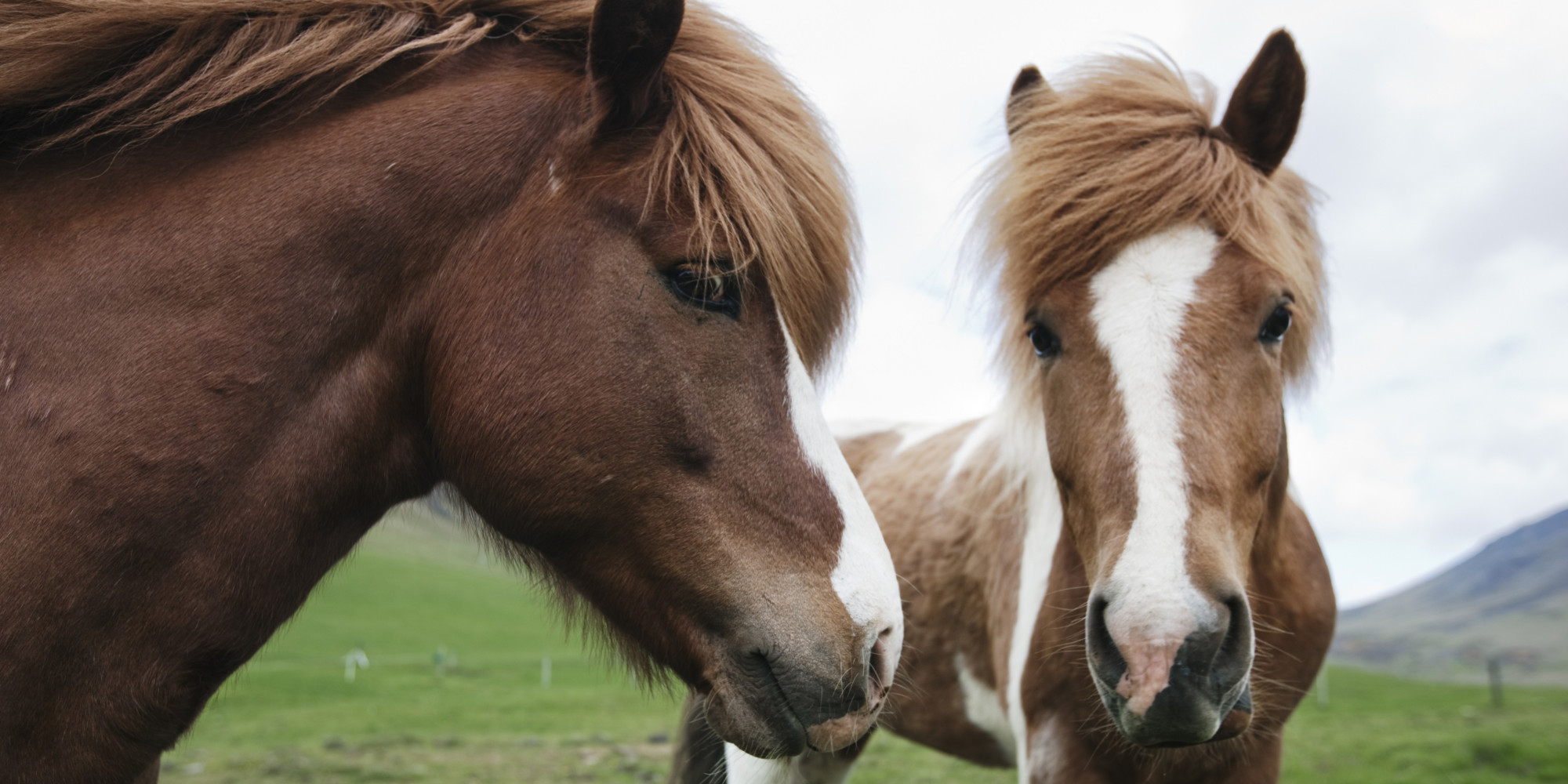 domesticated horses Domesticated animals such as cattle and horses are particularly susceptible to it,  with horses being the most likely of all to die.