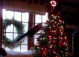 Cats. vs Christmas Trees In Epic Holiday Battle