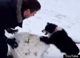 Just A Dog Helping Her Human To Build A Snowman