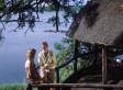 8 Luxury Treetop Stays To Experience