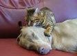 Cat Tries To Hypnotize Dog Friend With Dreamy Head Massage