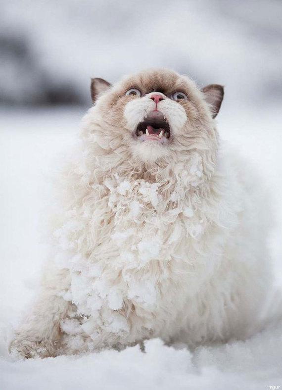 chat neige premiere fois