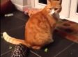 Cat Is Not Impressed With Tortoise's Shenanigans