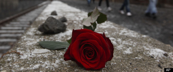 HOLOCAUST MEMORIAL ROSE