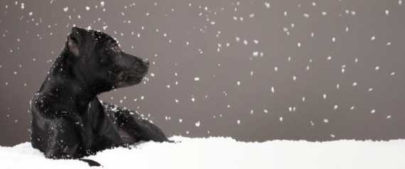 PET SAFETY WINTER