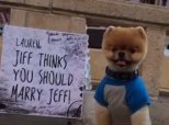 When Jiff The Pomeranian Helps Pop The Question, There Is Only One Answer