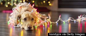 SAD CHRISTMAS DOG