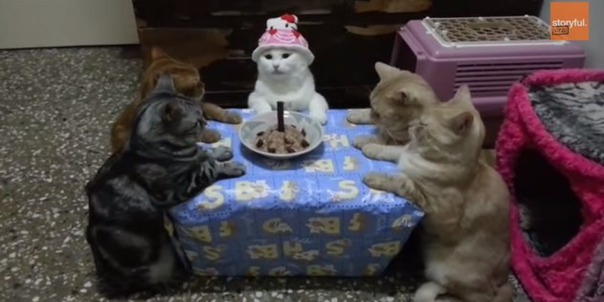 Coworker threw a b-day party. For her cat. | GBCN