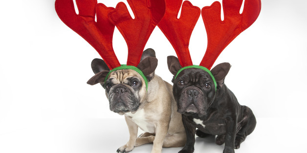 Images WATCH: Animals Celebrating the Holidays Will Make Your Jolly With Joy 1 animals