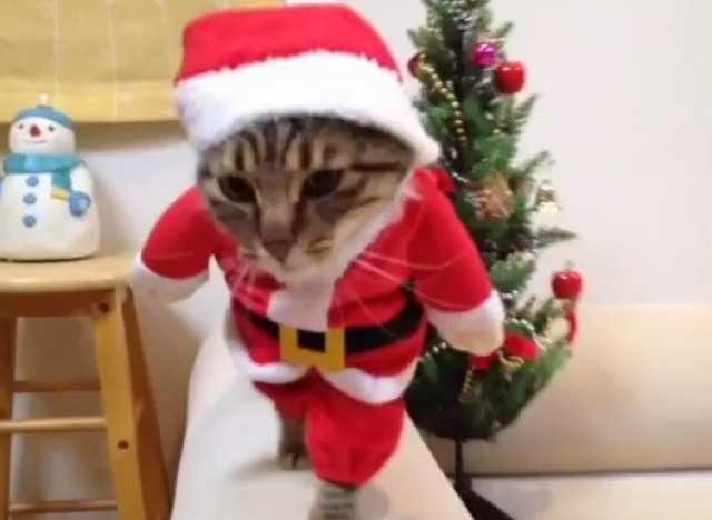de pere chat Coloriage pere noel chat sur cette image, papa noël offre une souris en peluche à son chat imprime ce dessin gratuit et rend ce cadeau encore plus magnifique.