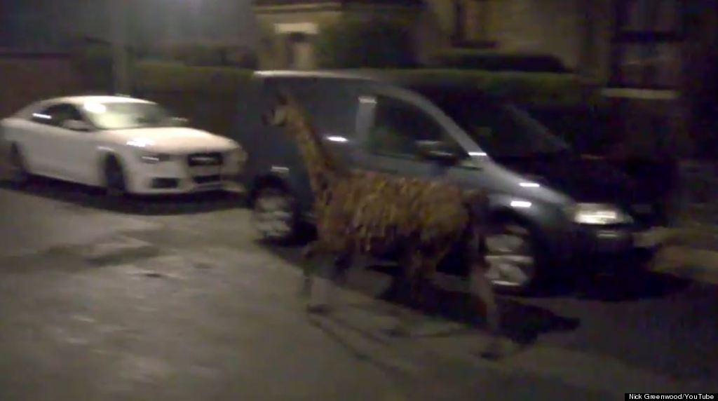 llama littlebrough manchester