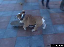Skateboarding Dog Breaks Up Protests In Ukraine