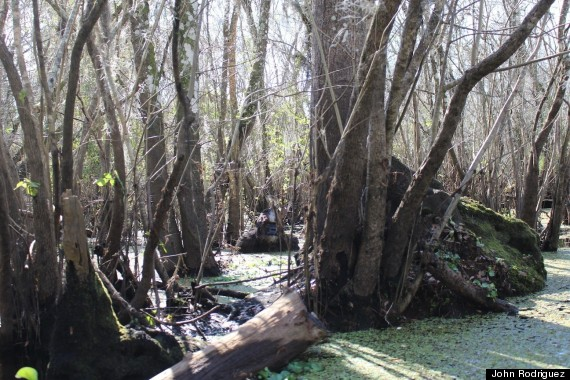 Fisherman says he saw bigfoot bathing and he sent us a for Hillsborough river fishing