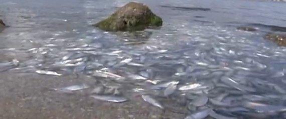 DEAD FISH FLORIDA