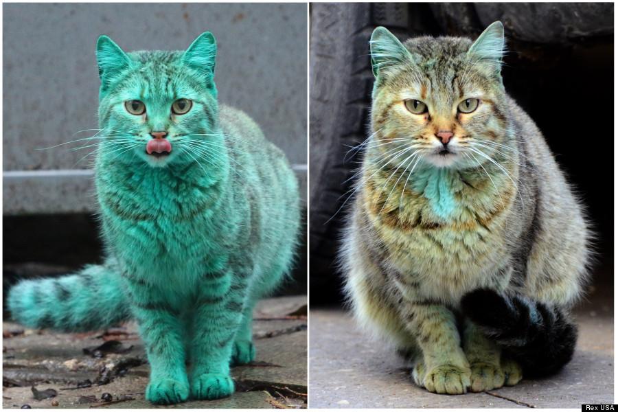 green cat not green