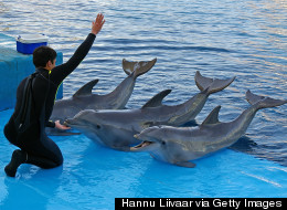 Say 'No Tanks' to Swim With Dolphin Programmes