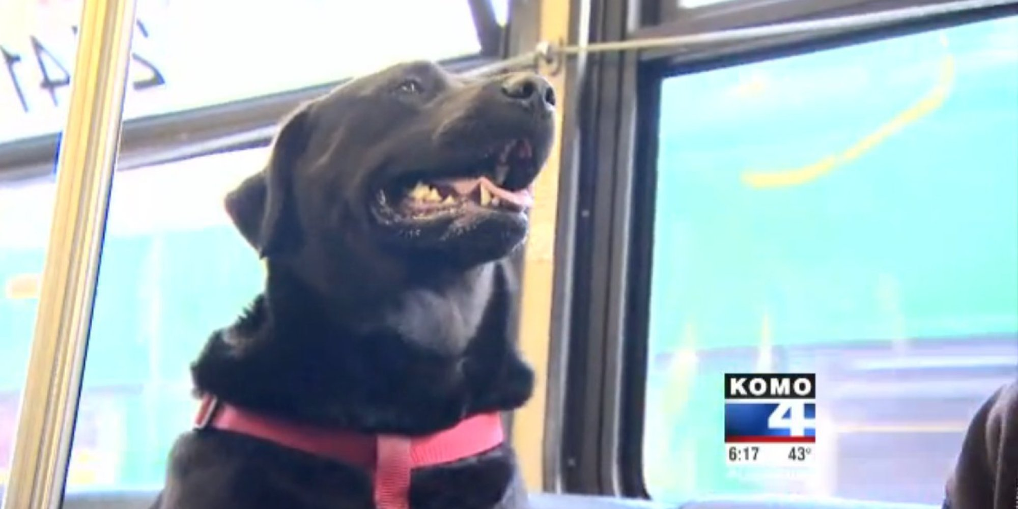 South Seattle College >> Seattle Dog Figures Out Buses, Starts Riding Solo To The