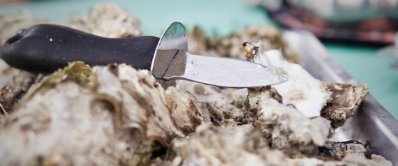 WILD OYSTERS EXTINCT DISAPPEARING FARMED