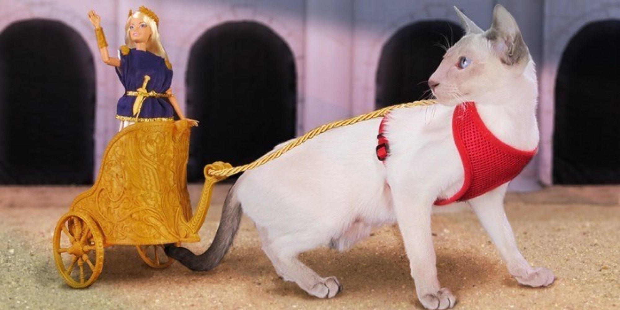 finally a chariot for barbie that straps to a cat huffpost