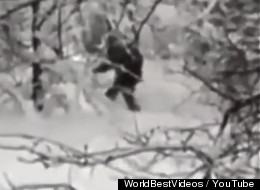 Bigfoot Strolls Through A Russian Forest -- At Least That's The Claim [VIDEO]