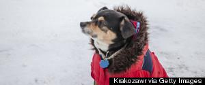 DOG SNOW
