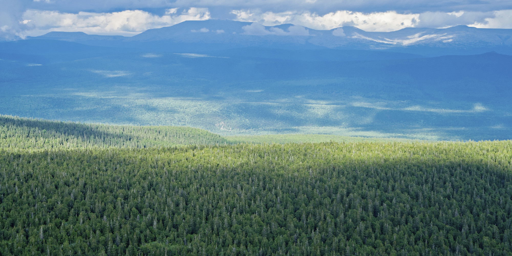 Russian Forestry Review Russian Timber 83