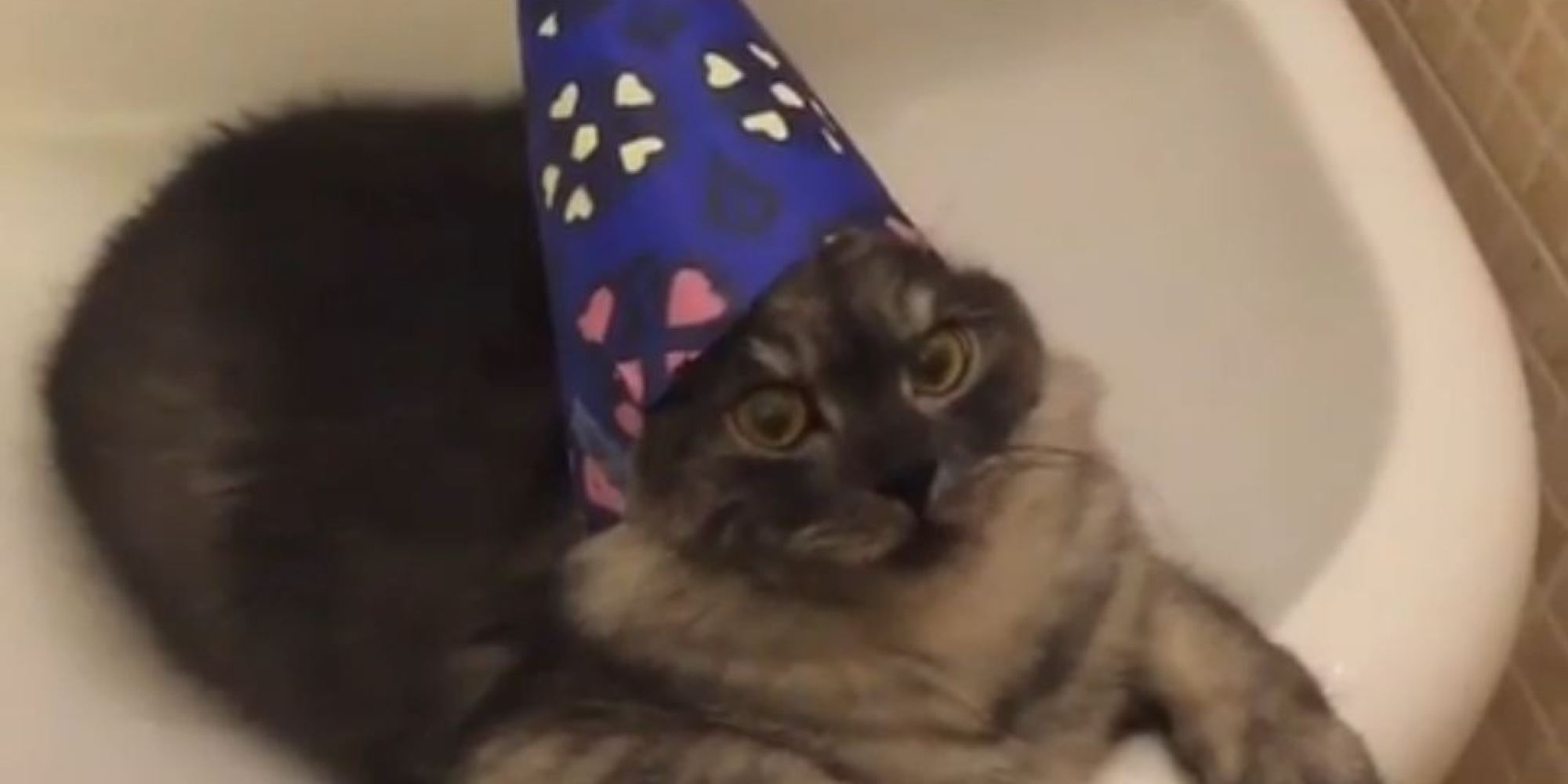Cat With Wizard Hat On