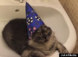 Magically Cute Wizard Cat Hangs Out in Bathroom Sink