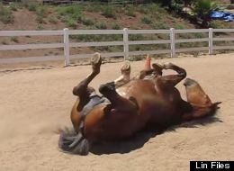 A Horse Farting For A Full Minute Is Exactly As Funny As It Sounds