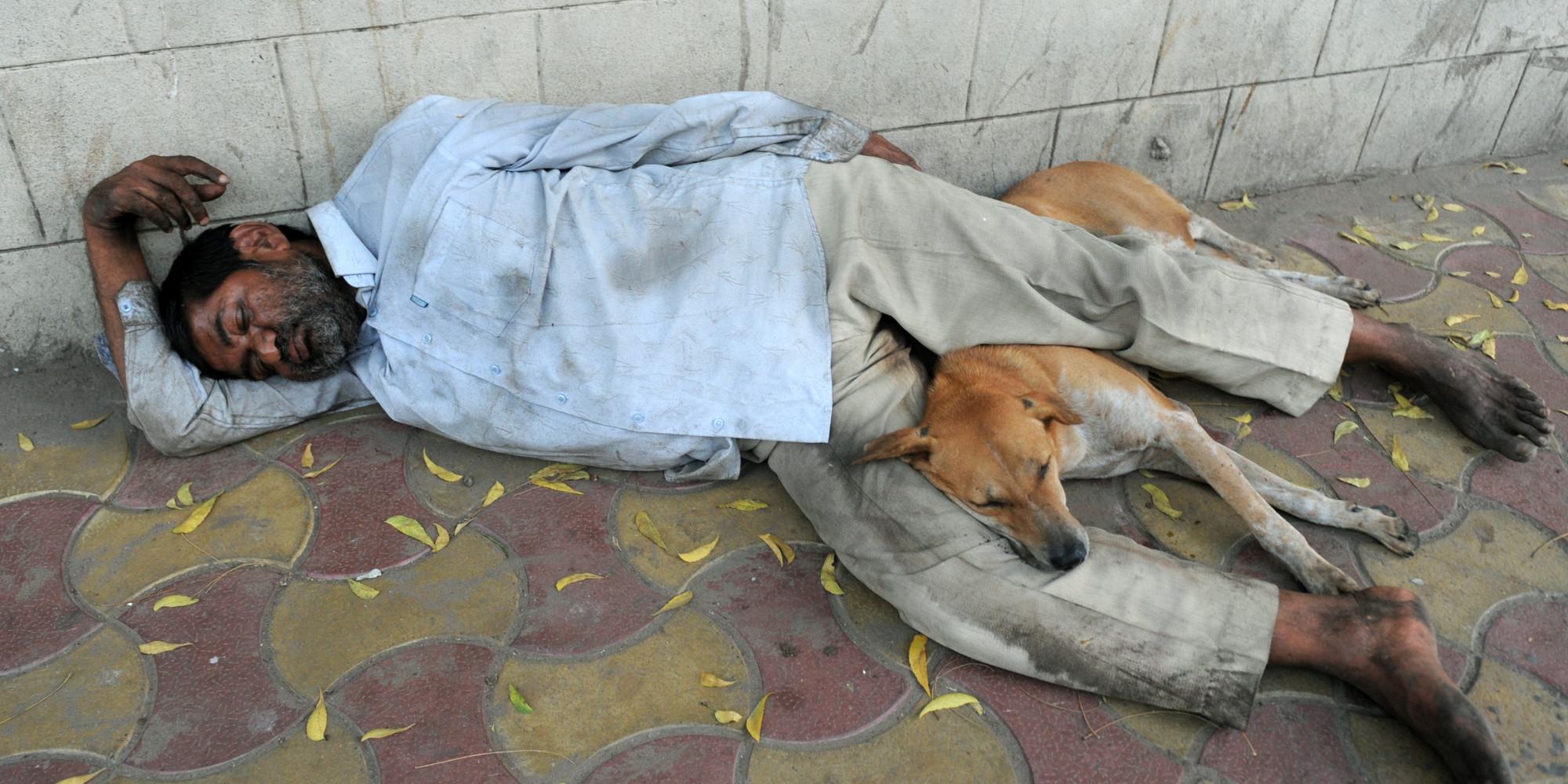 blog offener brief familie alle hundehalter