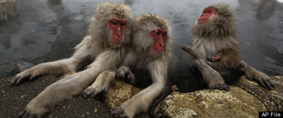 MACAQUES SELF DOUBT