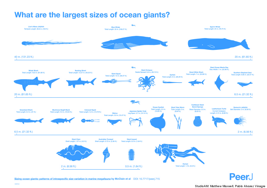 largest sea creatures