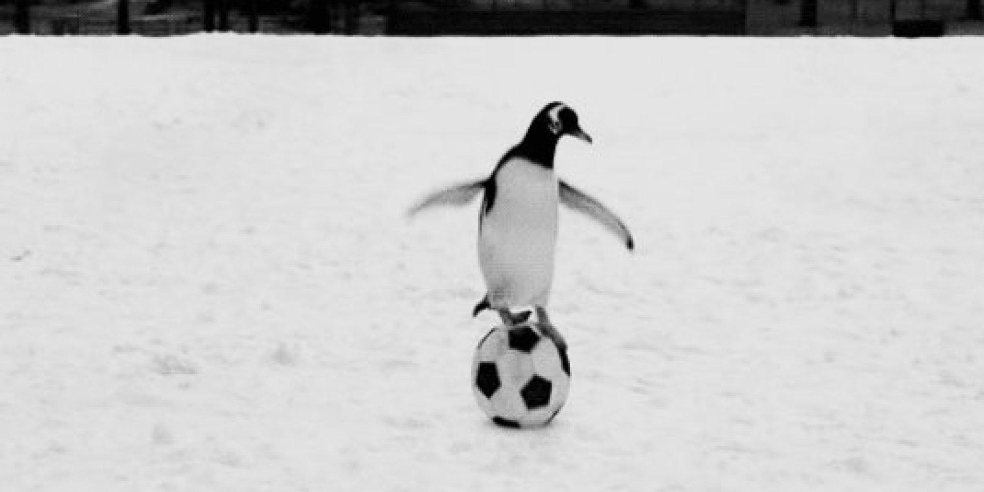 Cute penguins gif