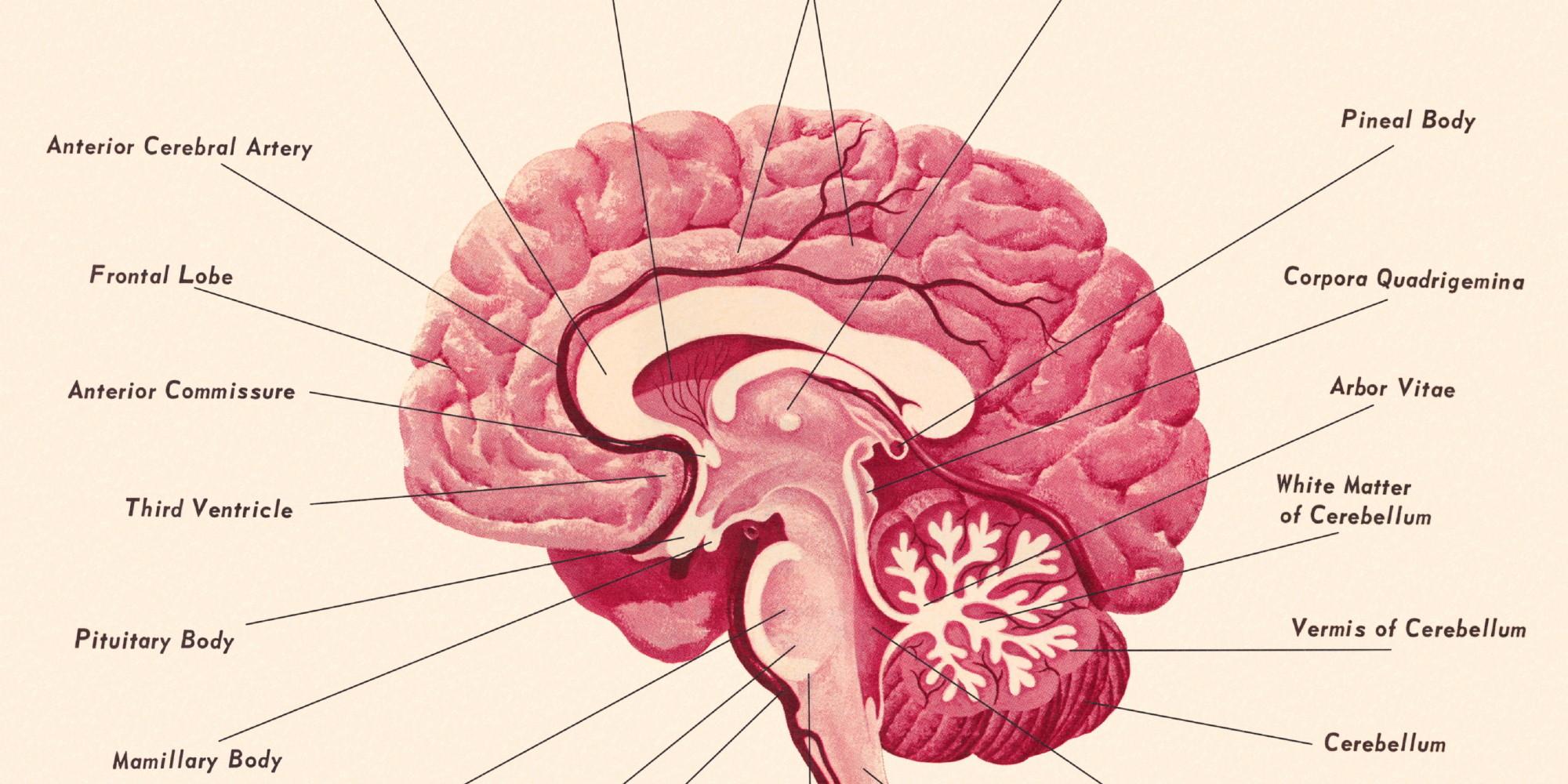 Celebrity Brain Project - YouTube